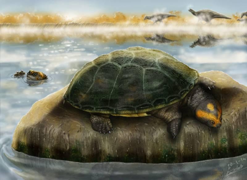 Ilustración de dos ejemplares de 'Eodortoka morellana' disfrutando en el agua / Carlos de Miguel Chaves.