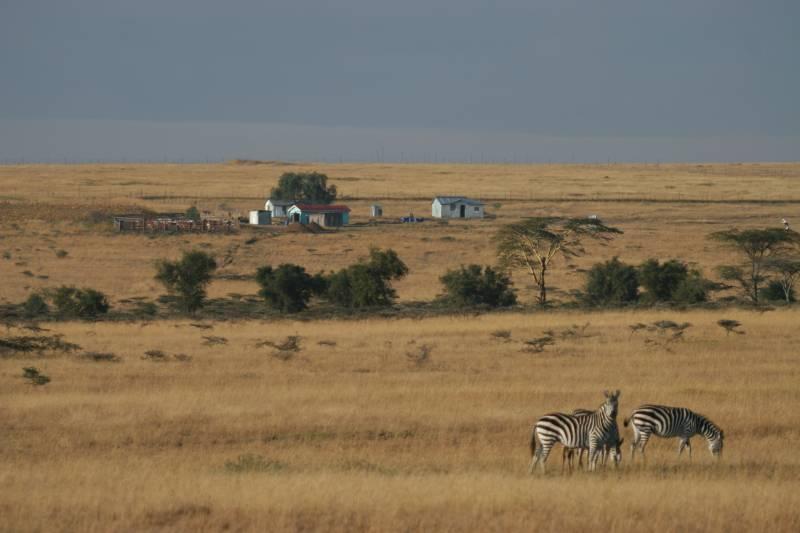 Alertan de un preocupante declive de la fauna salvaje del parque Masai Mara