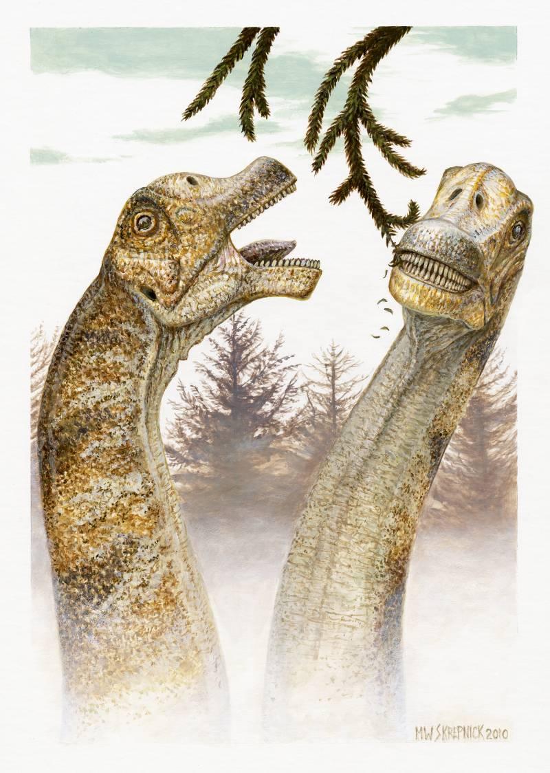 Descubren cuatro cráneos de una nueva especie dinosaurio herbívoro