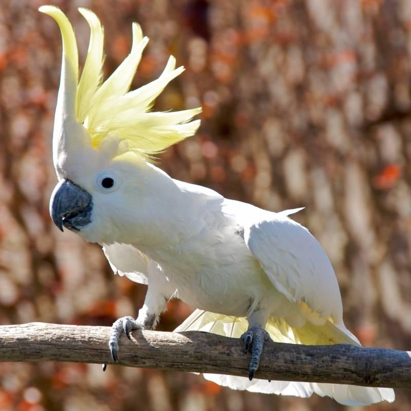 Descubren que algunas aves son capaces de seguir el ritmo de una melodía