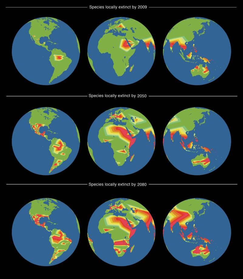 Mapas mundiales de las extinciones detectadas en 2009, junto con proyecciones para 2050 y 2080 basadas en la distribución geográfica de las familias de lagartos en del mundo.