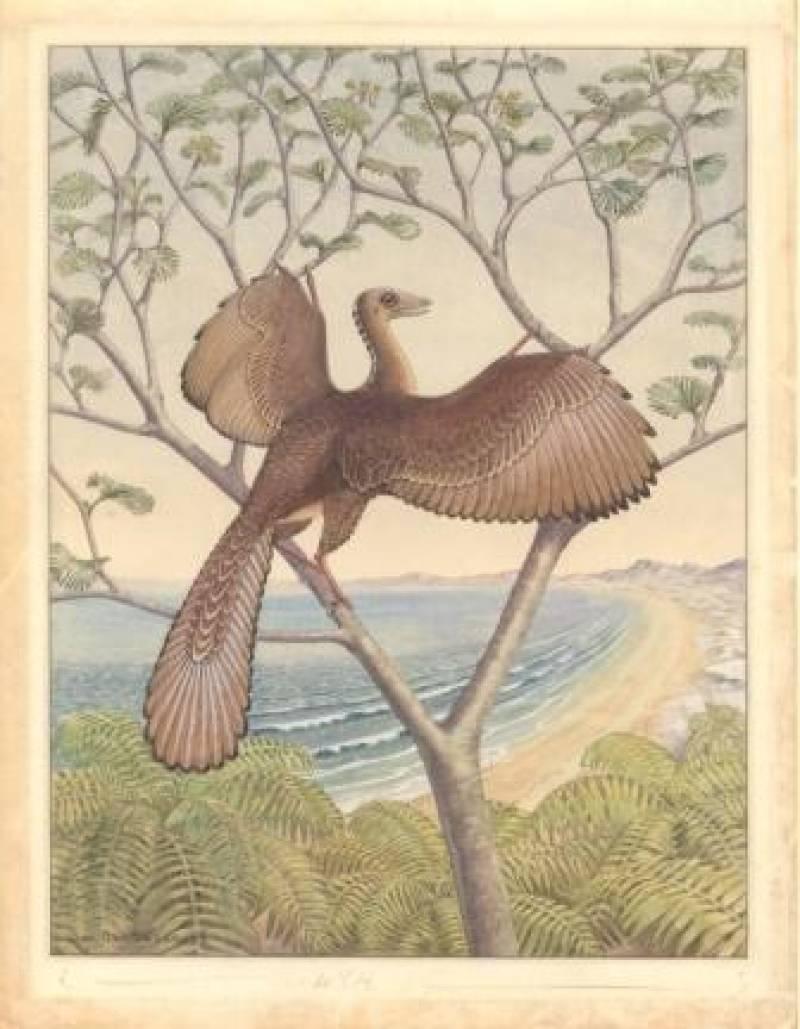 El ave más antigua que conocemos podía oír como los pájaros actuales