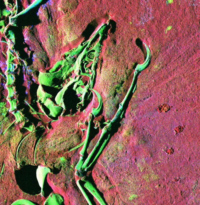 Encuentran un fósil con restos de plumas de dinosaurio