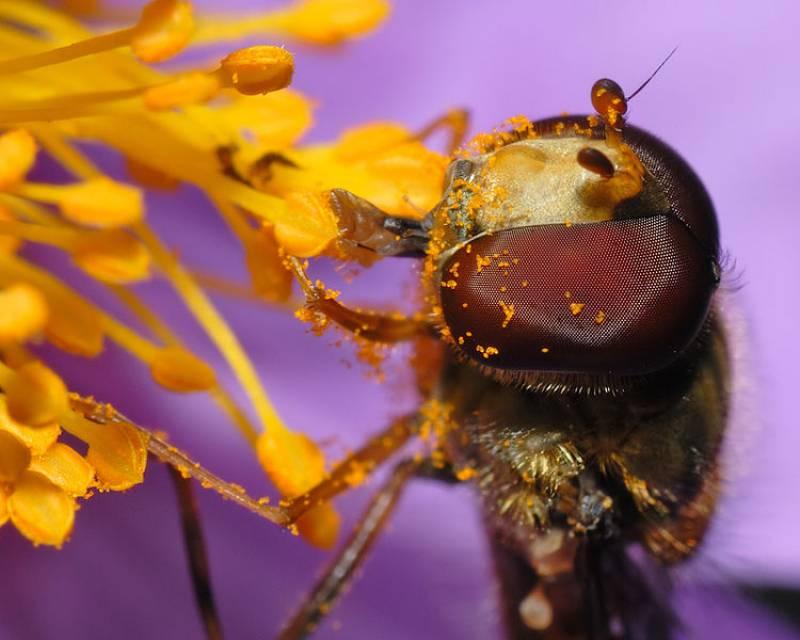 Hacia el desarrollo de pronósticos en tiempo real del polen