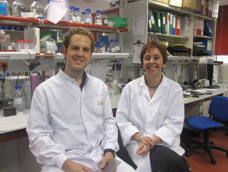 Investigadores españoles logran que las células del melanoma se autodestruyan