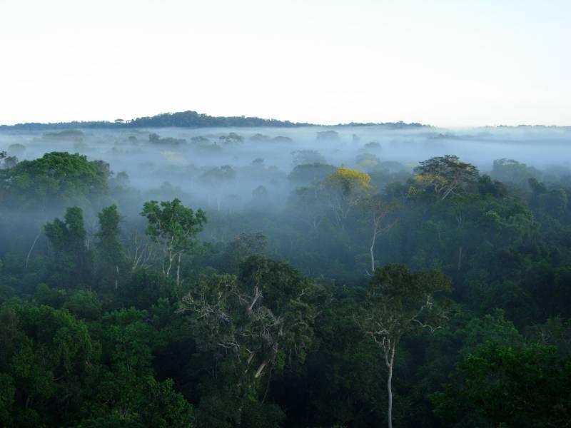 La deforestación de la selva no es rentable económicamente (y II)