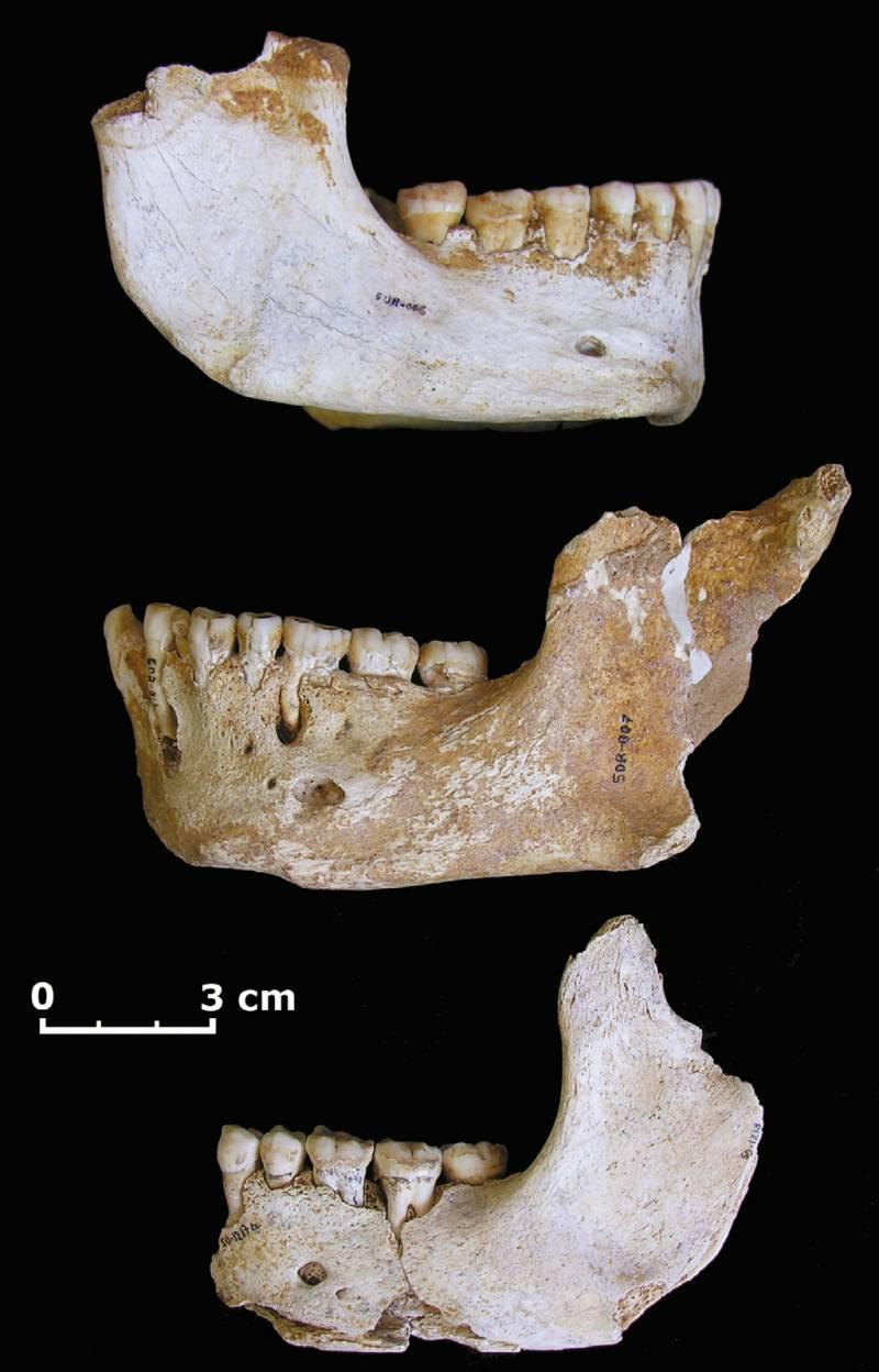 Mandíbulas de neandertal encontradas en la cueva asturiana de El Sidrón.
