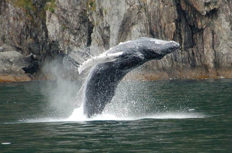 Los murciélagos y las ballenas comparten un mismo mecanismo molecular para orientarse