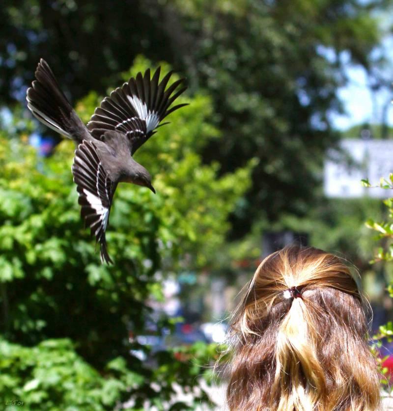 Pájaros que son capaces de reconocer un rostro entre una multitud