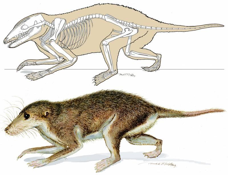 Maotherium asiaticus.