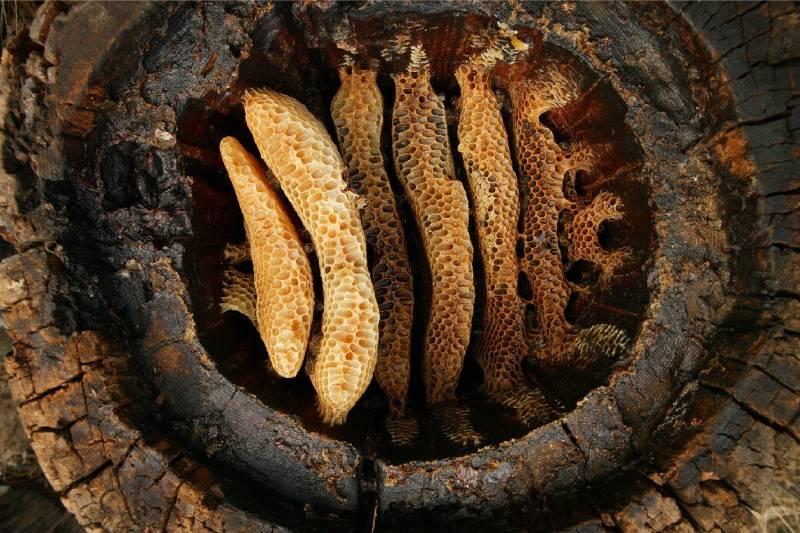 Cera de abeja en una vasija