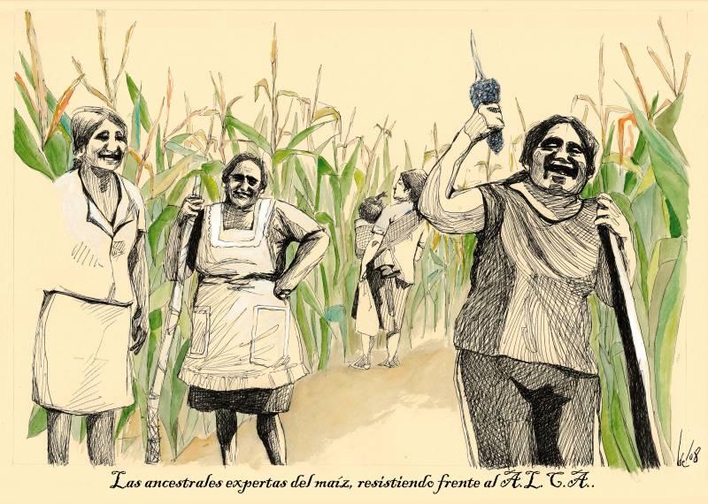 Las ancestrales variedades de maíz