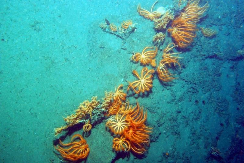 En el Cantábrico, el robot submarino Liropus 2000 filmó por primera vez los ecosistemas más inaccesibles. Imagen: IEO