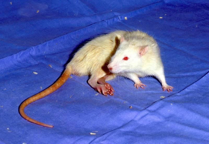 Alternativas al uso de animales en la experimentación