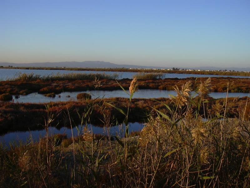 La zona costera del delta del Ebro puede hundirse 50cm