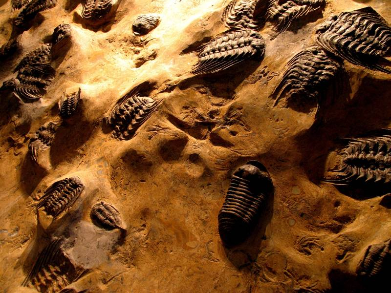 TRILO 08: IV Conferencia Internacional sobre Trilobites