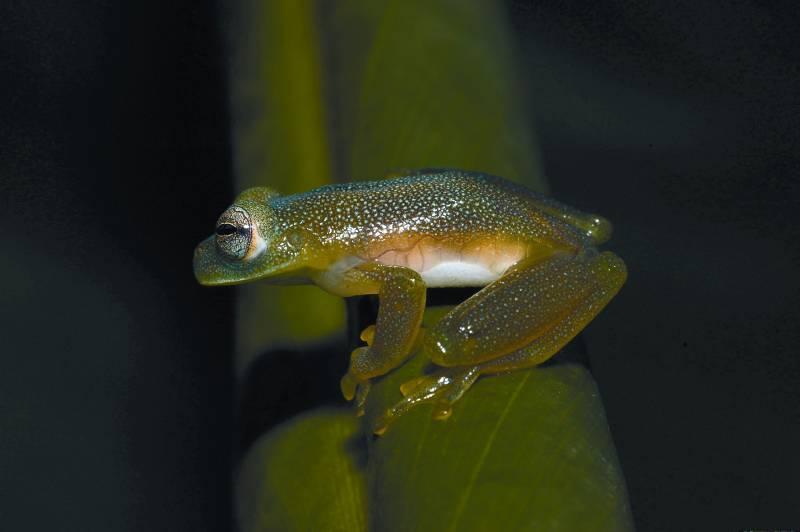 Un fósil de un anfibio resuelve el debate sobre el origen de ranas y salamandras