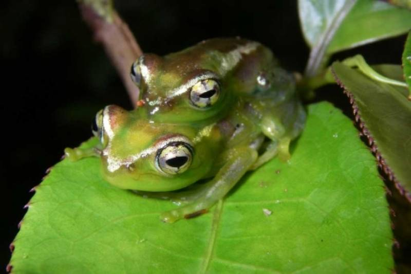 Descubren más de 600 nuevas especies en Madagascar