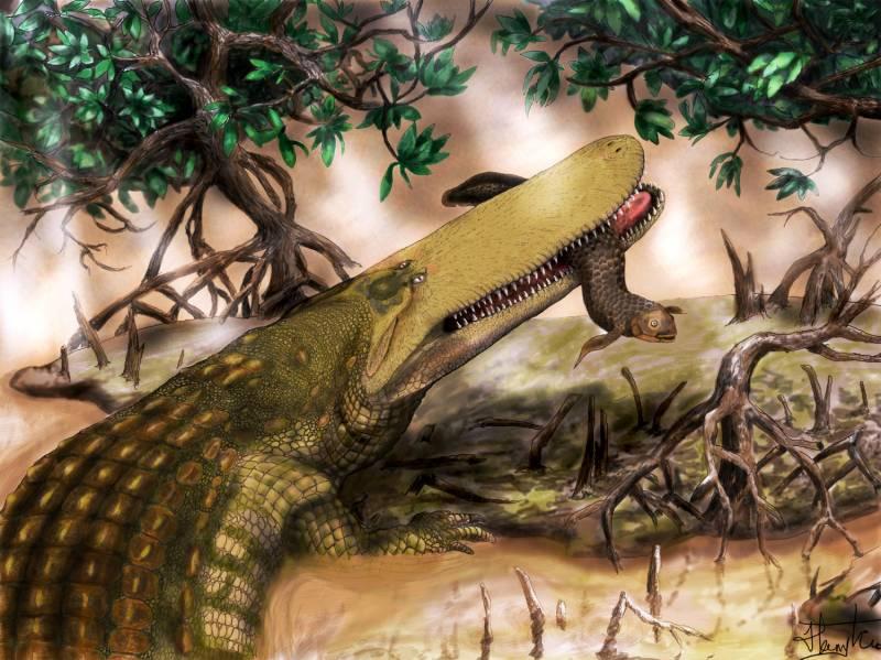 Ilustración del cocodrilo escudo