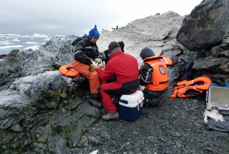 Un grupo de científicos analizando un pingüino en la Isla Kopaitic (Antártida). / Efe