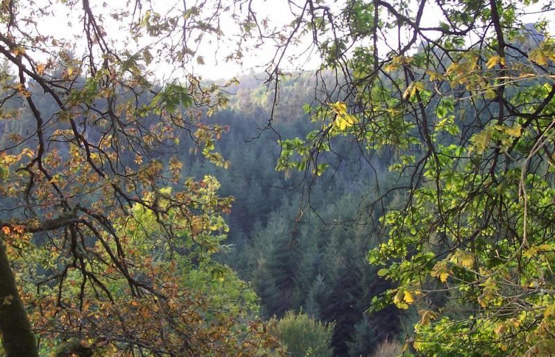 España destinará 25 millones de euros en 2010 a reducir las emisiones de CO2 por la deforestación