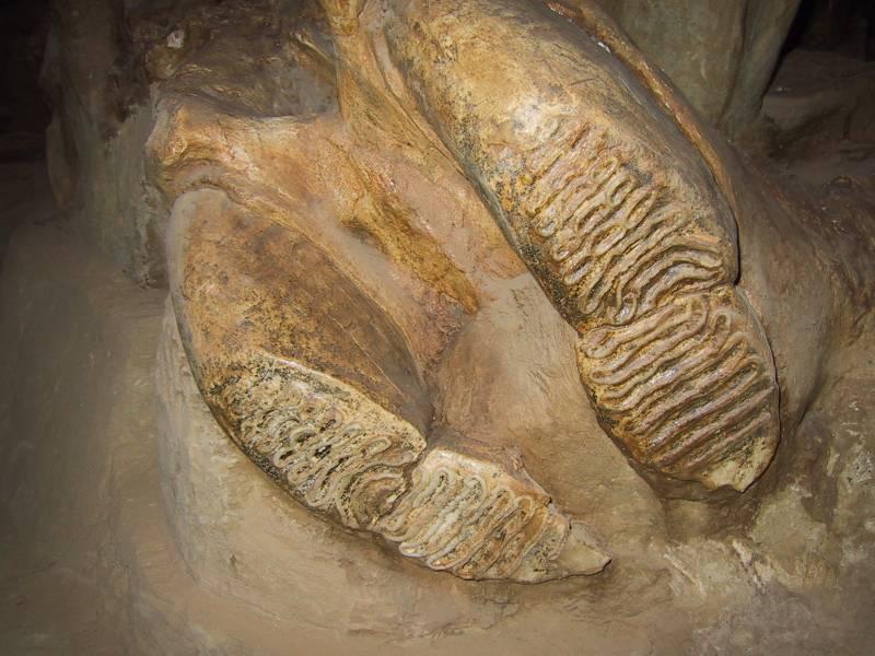 Estudios científicos arrojan nueva luz sobre la evolución de los mamuts