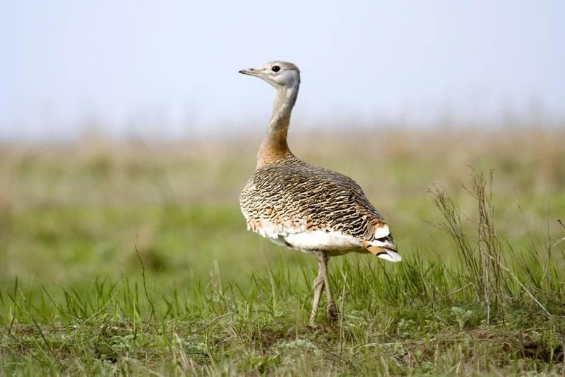 El 50% de los espacios españoles de la red Natura 2000 no está del todo protegido