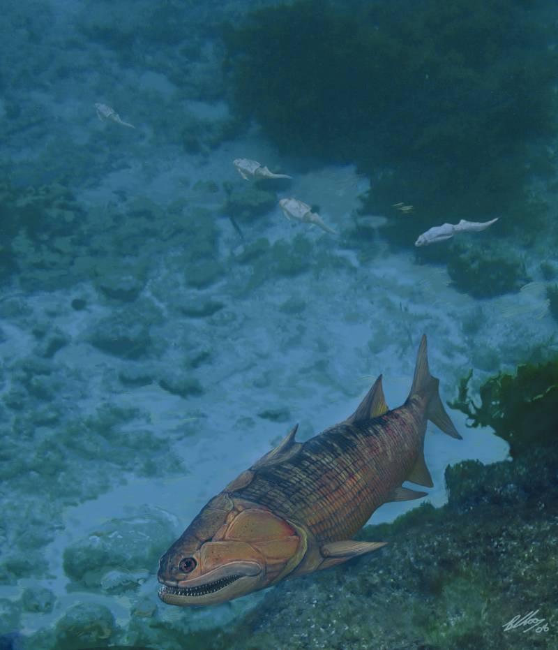 Encuentran el pez óseo más antiguo y mejor conservado en China