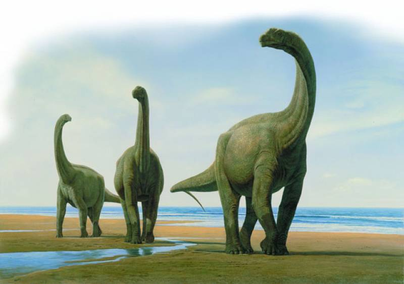 Grupo de Camarasaurios