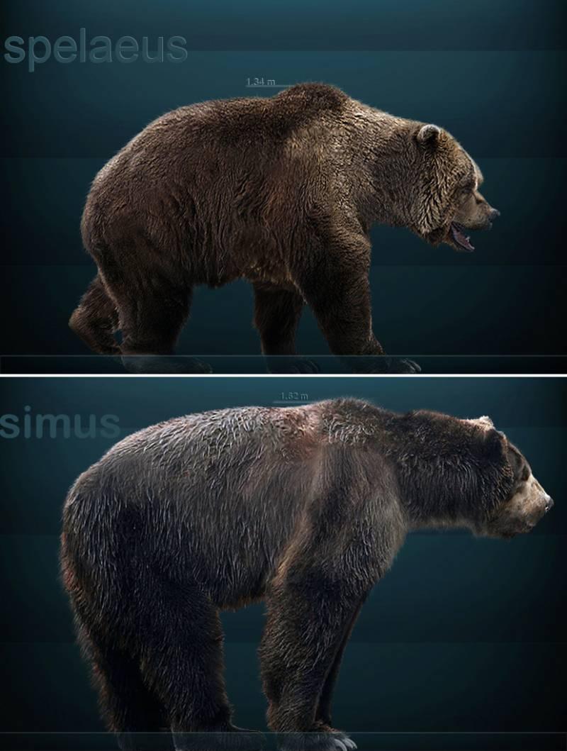 Los osos prehistóricos también comían de todo