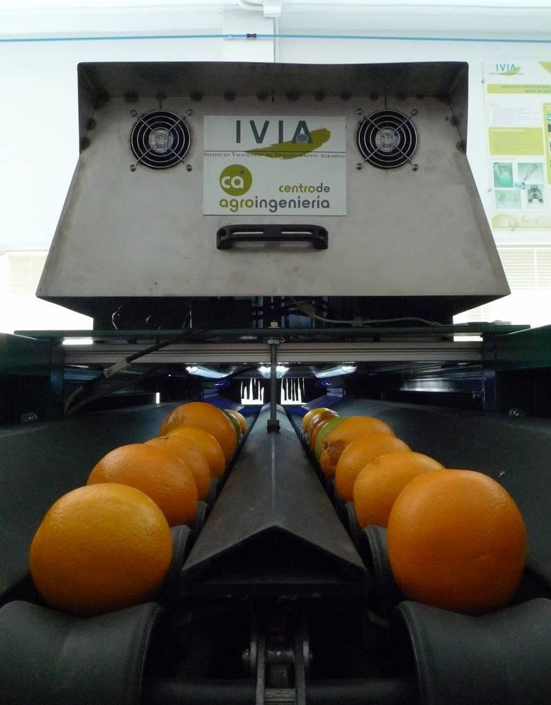 Inspeccionan naranjas y mandarinas con visión artificial