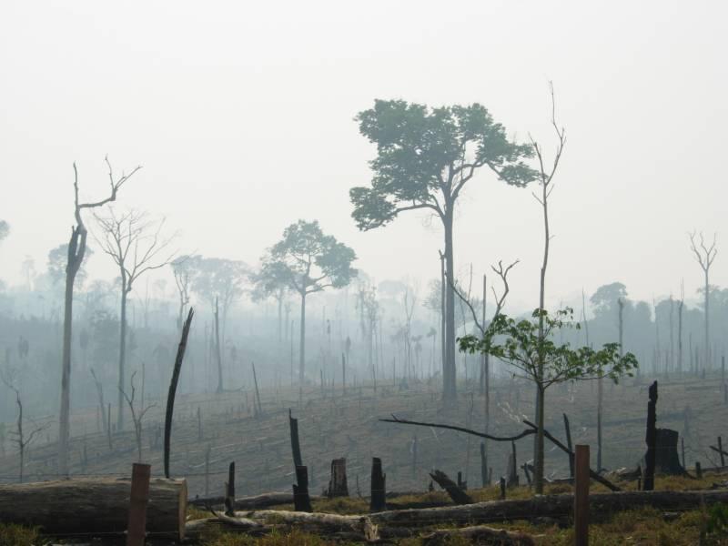 La deforestación de la selva no es rentable económicamente