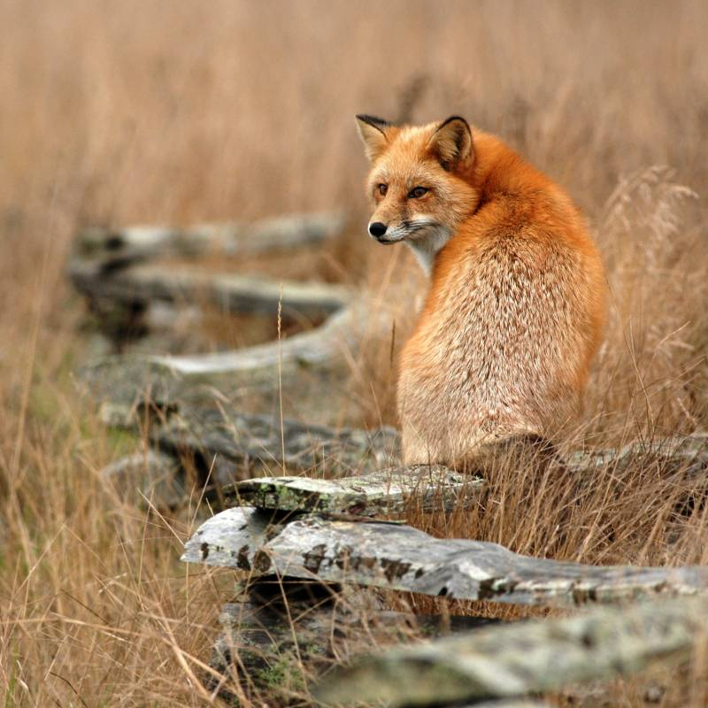 Los mamíferos carnívoros rastrean la abundancia de frutos