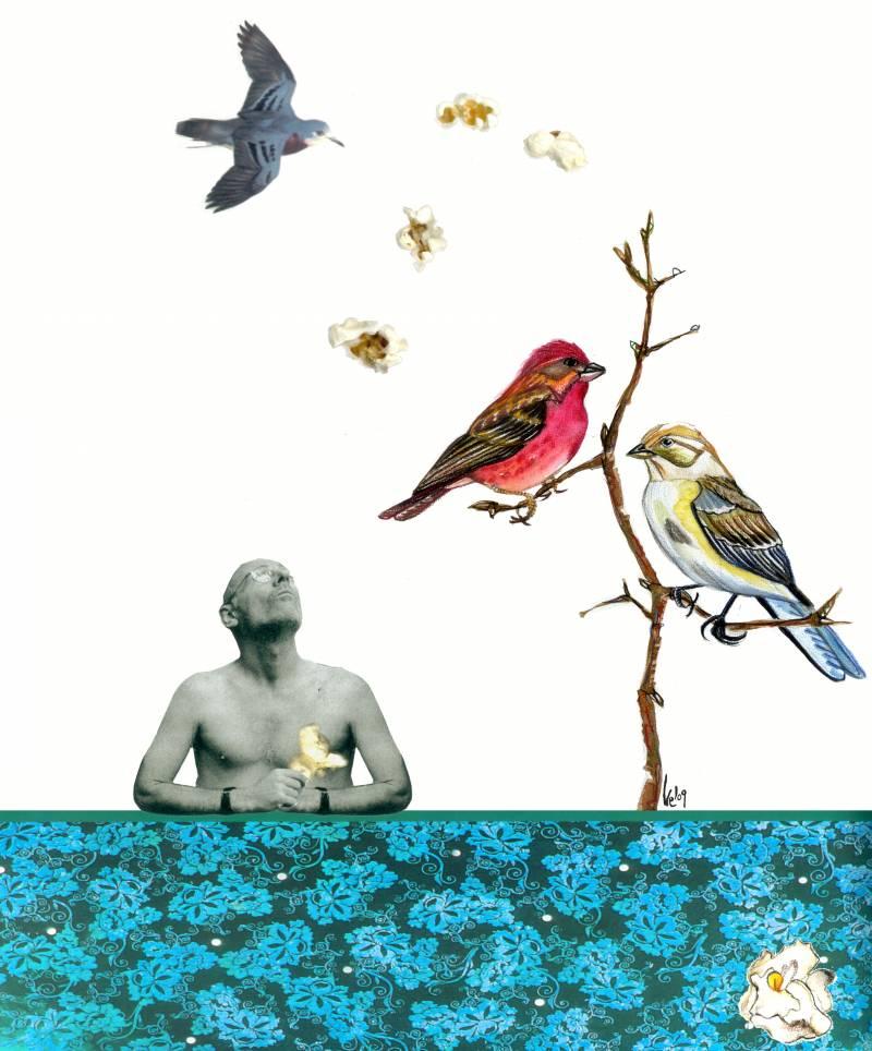 Alimentar a las aves puede cambiar su destino evolutivo