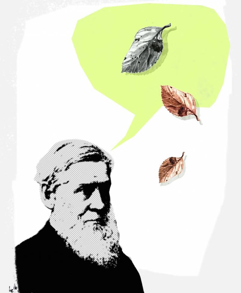 Hoy se cumplen 200 años del nacimiento de Asa Gray, naturalista y médico, considerado uno de los botánicos más importantes de la historia