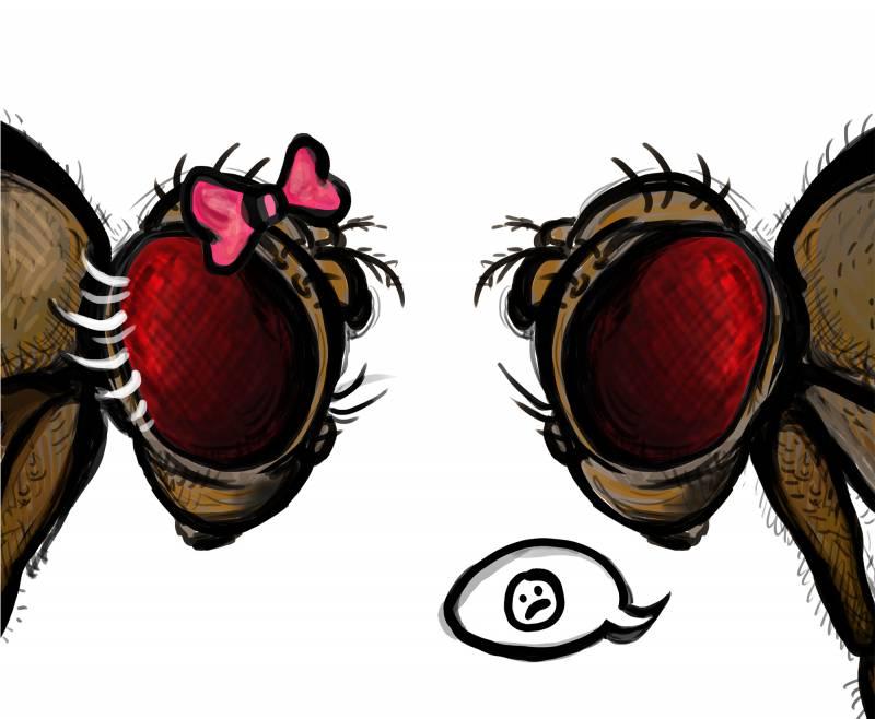 La 'maldición' de la madre entre moscas de la fruta