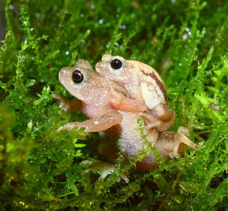Aumenta el número de especies amenazadas en el mundo