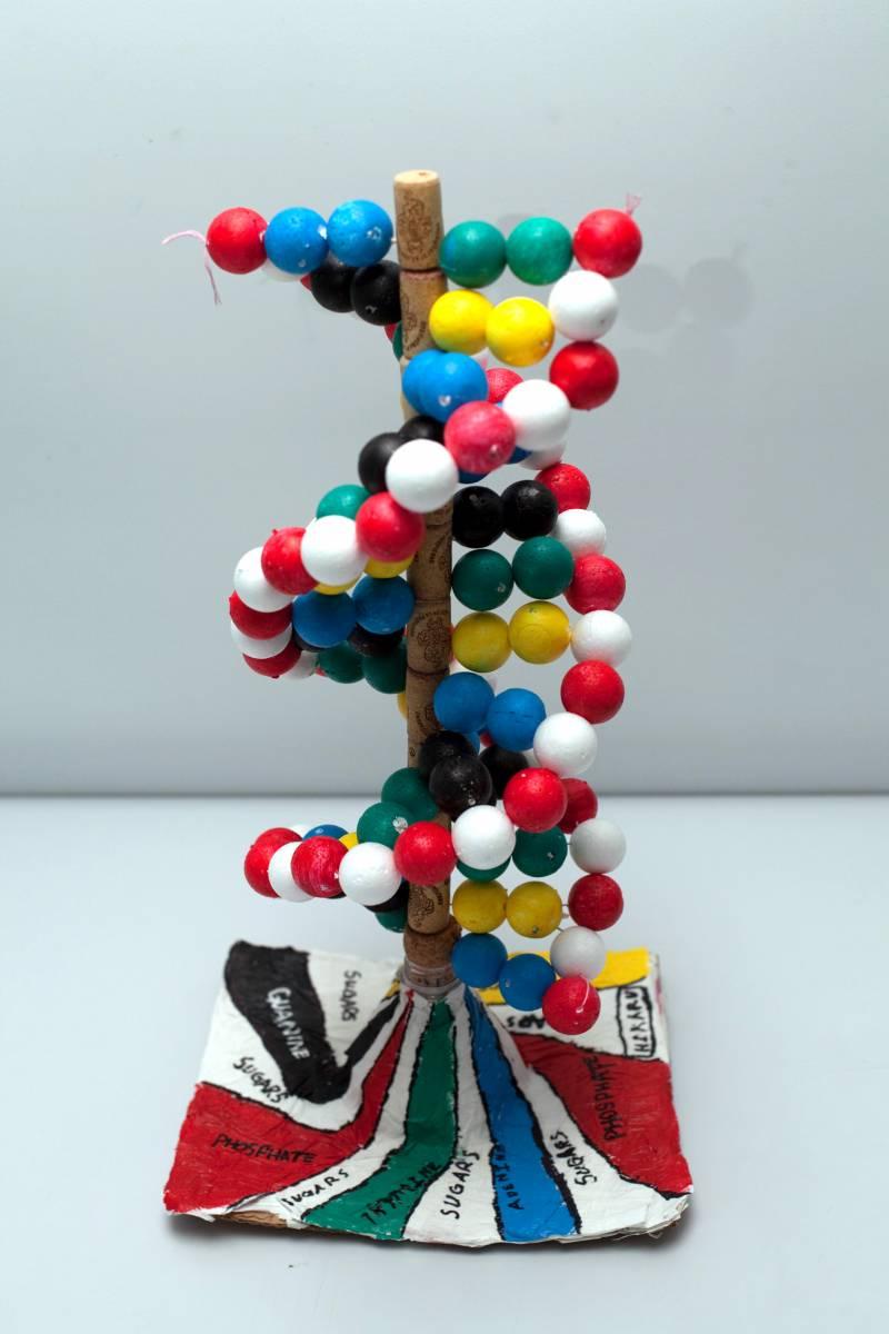 Celebran el primer Concurso Artístico del ADN