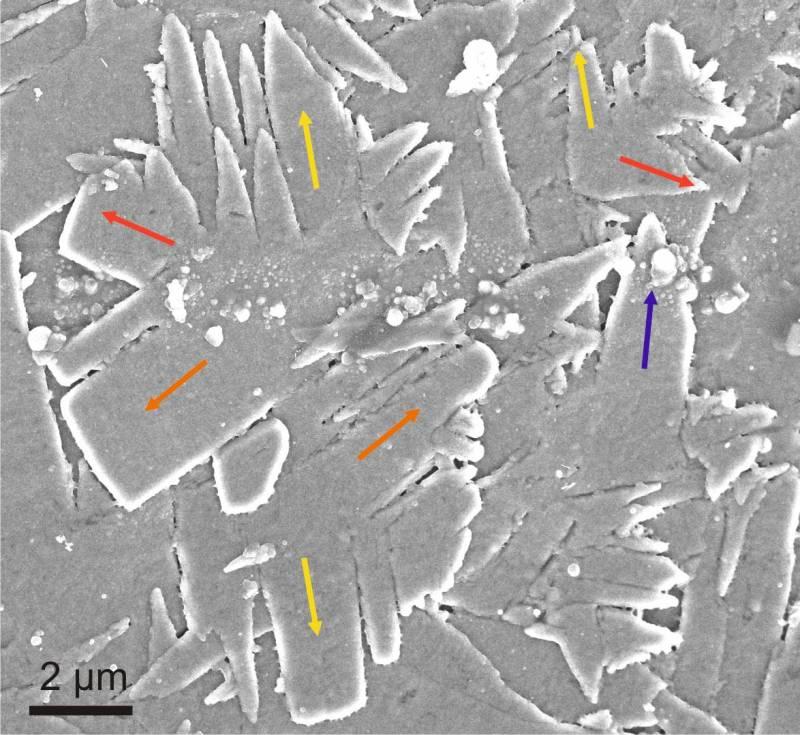 Describen el crecimiento ordenado de los cristales de las conchas