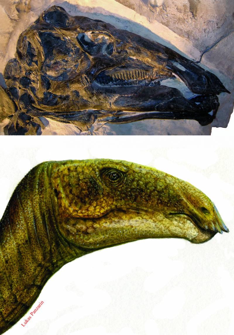 Describen un nuevo dinosaurio de Italia extraodinariamente completo