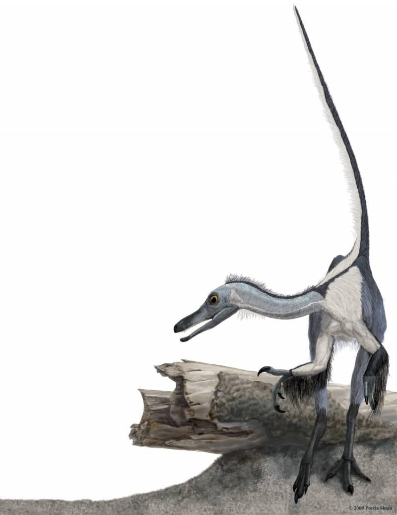 Descubren un nuevo dinosaurio con forma de ave que evolucionó de forma independiente
