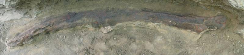 Desvelan la historia de una ballena de 4,5 millones de años de antigüedad en Huelva