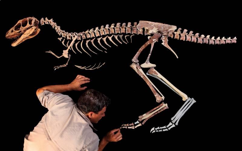 El antecesor del tiranosaurio era 100 veces más pequeño