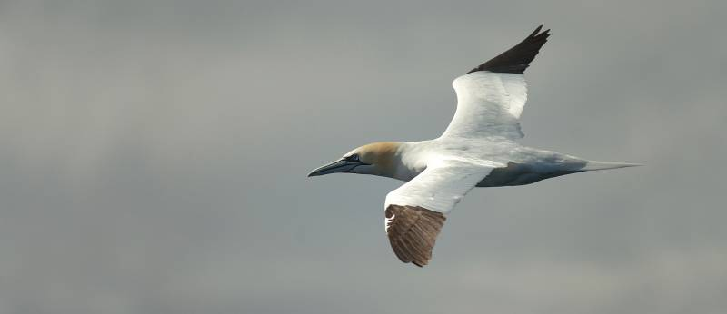 Elaboran el primer inventario de aves marinas españolas del mundo