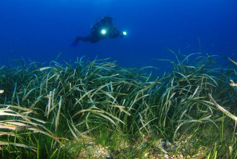 España pierde cada año más del 3% de praderas marinas