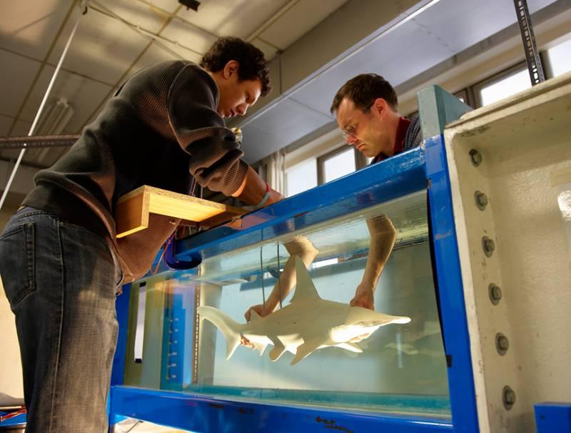 Estudian el sentido del olfato de los peces