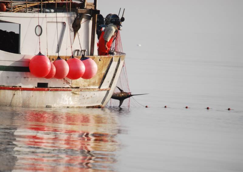Más de la mitad de las capturas de pez espada en el Mediterráneo son ilegales