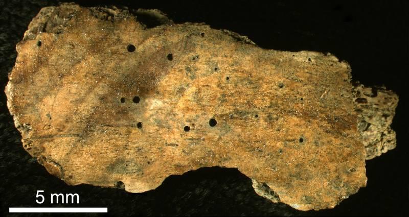 Gusanos devoradores de huesos de hace 30 millones de años