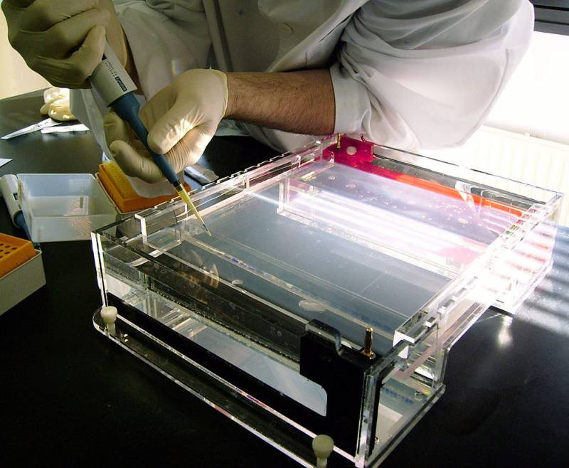 La biotecnología española debe apostar por los sectores alimentario y vegetal para competir