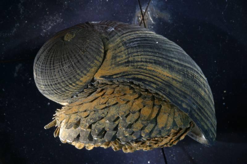 La concha de un caracol sirve de inspiración para desarrollar una 'armadura'